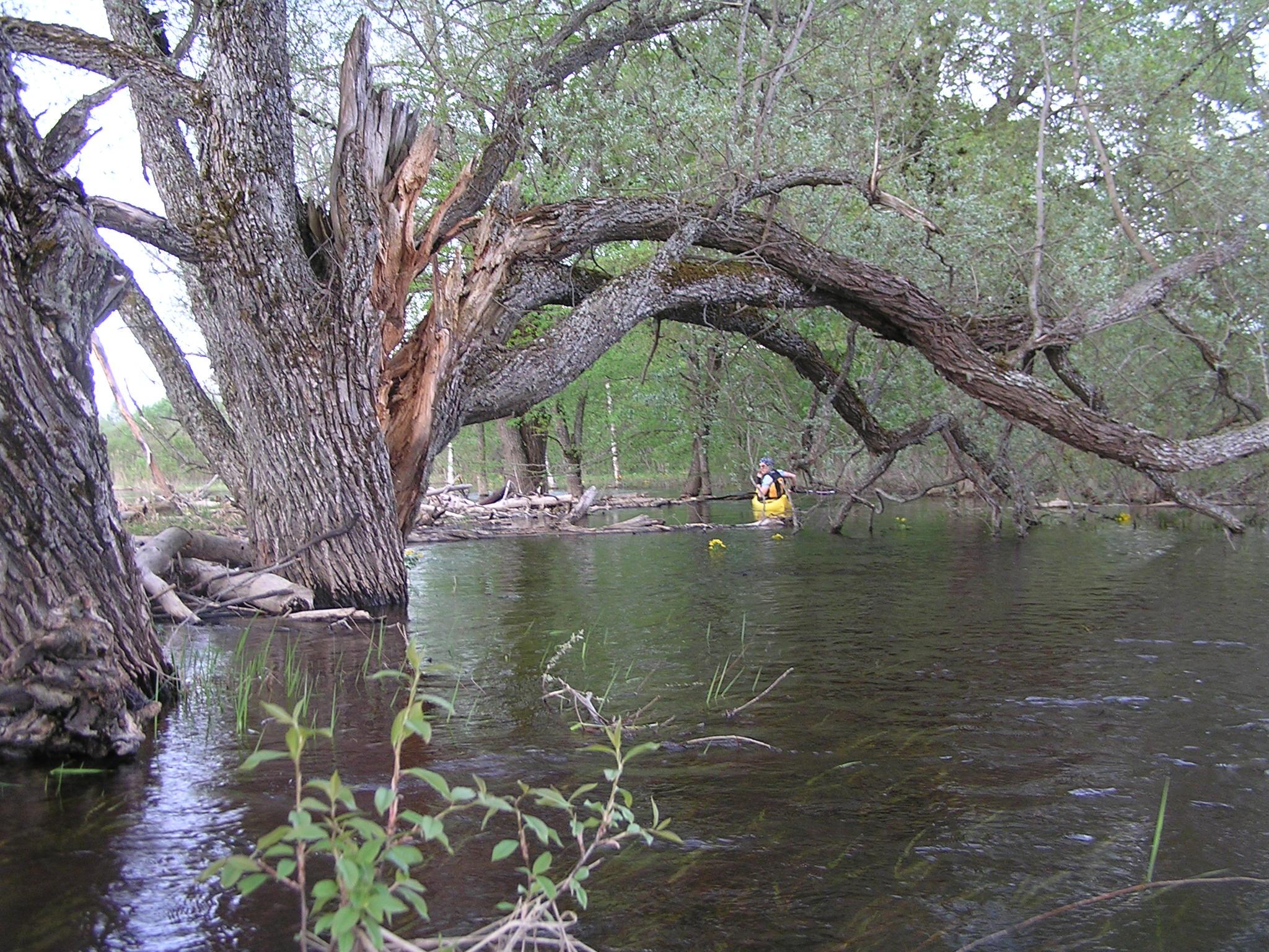 Suurvesi Põltsamaa jõel